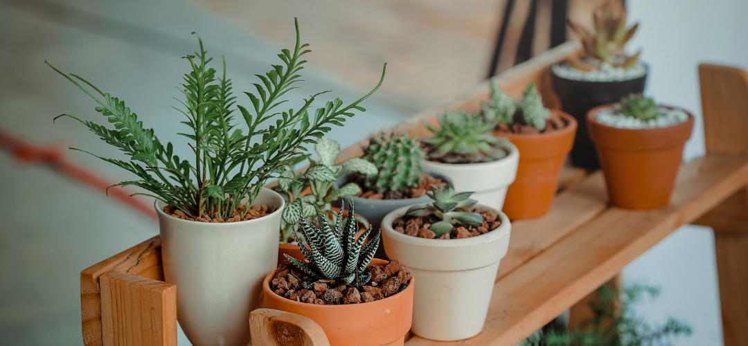How to properly take care of your plants in the summer!